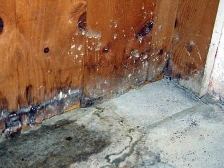 The Most Likely Place That Mold Will Be Found Include Areas In House Are Damper Than Others This Could Bats Or Crawl Es