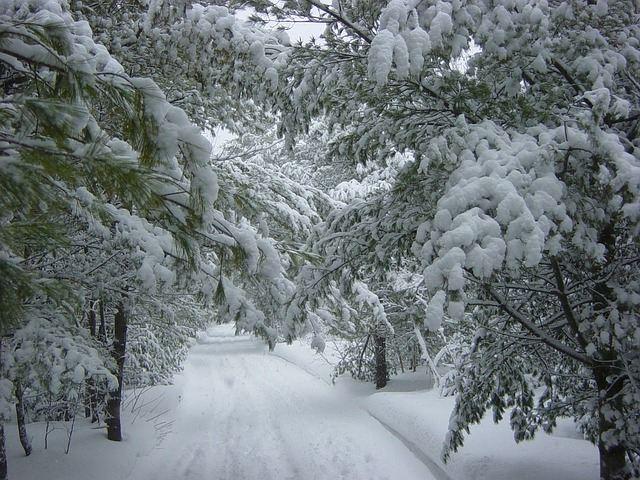 winter-19390_640