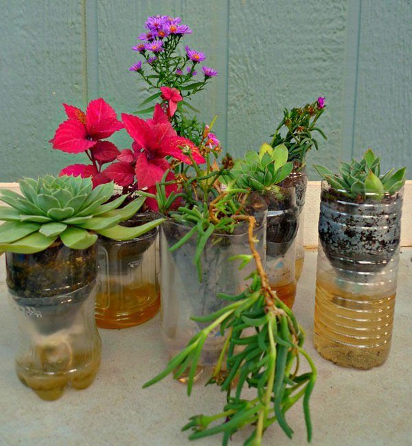 Plastic Bottle Planters