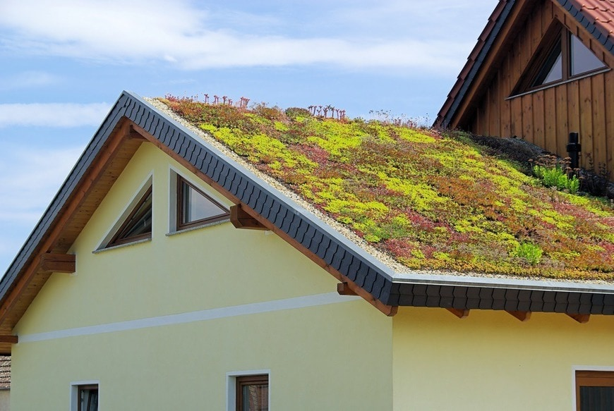 Gründach - green roof 04