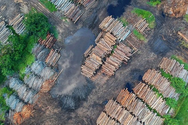 Birds Eye View Deforestation